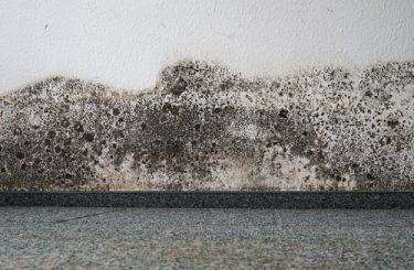 Eigentumsverletzung durch Wasserschaden an Tapete und Teppichboden in einer Mietwohnung
