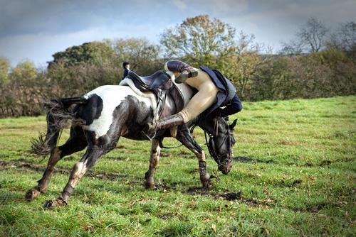 Reitunfall - Beweislast - Schaden auf tierische Natur des Pferdes zurückzuführen