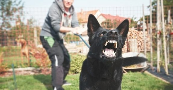 Ordnungsverfügung gegen Hundehalter nach Beißvorfall
