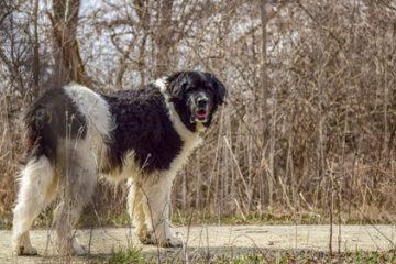 Tierhalterhaftung – Ängste oder Leiden eines Hundes begründen keinen Schmerzensgeldanspruch