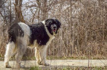 Tierhalterhaftung - Ängste oder Leiden eines Hundes begründen keinen Schmerzensgeldanspruch