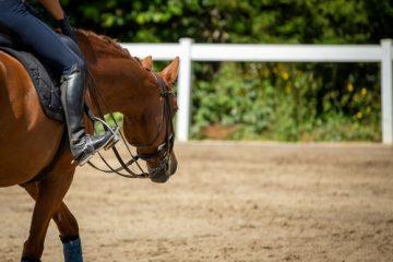 Dressurpferdkaufvertrag – Rückabwicklung wegen einer Erkrankung