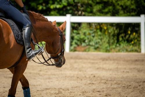 Dressurpferdkaufvertrag - Rückabwicklung wegen einer Erkrankung