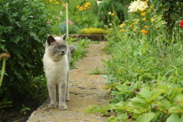 Unterlassungsanspruch wegen Betreten des Grundstücks durch Nachbars-Katzen in ländlicher Region