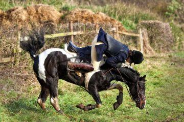 Tierhalterhaftung bei Reitunfall – Beweislast für Sturzursache