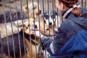 Wegnahme von Hunden und Verbringung in ein Tierheim – Unterbringungskosten