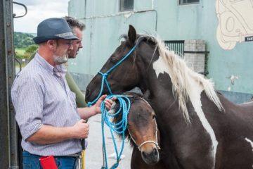 Rückabwicklung eines Pferdekaufvertrags wegen Mangelhaftigkeit des Pferdes
