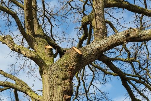 Abschneiden von herüberhängenden Zweigen des Nachbarn erst nach Fristsetzung zulässig