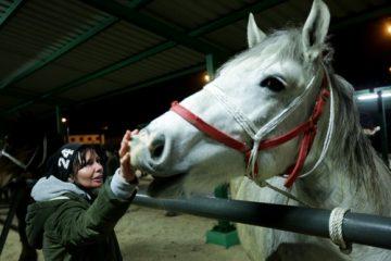 Pferdekauf – Kaufgewährleistungshaftung und Haftung Tierarzthaftung für Ankaufsuntersuchung
