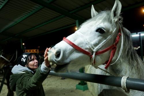 Pferdekauf - Kaufgewährleistungshaftung und Haftung Tierarzthaftung für Ankaufsuntersuchung