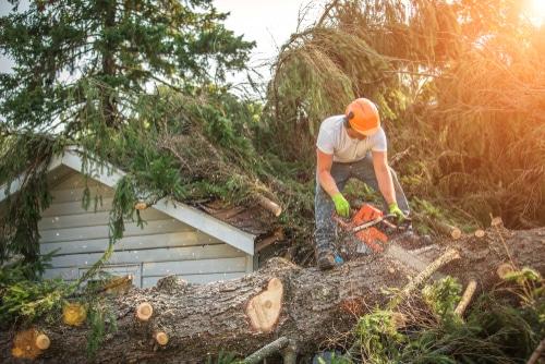 Baumfällgenehmigung Verschattung - Interesse des Grundstückseigentümers