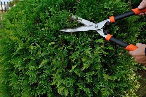 Anspruch auf Rückschnitt und Beseitigung von Hecken und Pflanzen an der Grundstücksgrenze