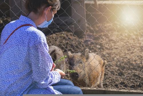 Schließung eines zoologischen Gartens während der Corona-Pandemie
