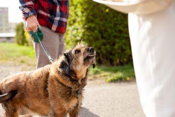 Tierhalterhaftung – Berücksichtigung der mitwirkenden Tiergefahr des verletzten Hundes