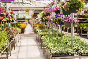 Verkehrssicherungspflicht – Schadensersatzanspruch bei Ausrutschen in Pfütze im Gartencenter