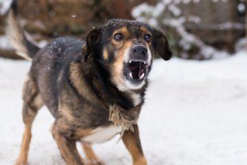 Reisevertrag – Haftung des Reiseveranstalters für Hundeangriff