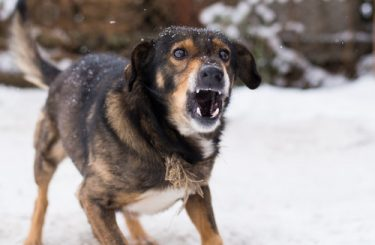 Reisevertrag - Haftung des Reiseveranstalters für Hundeangriff