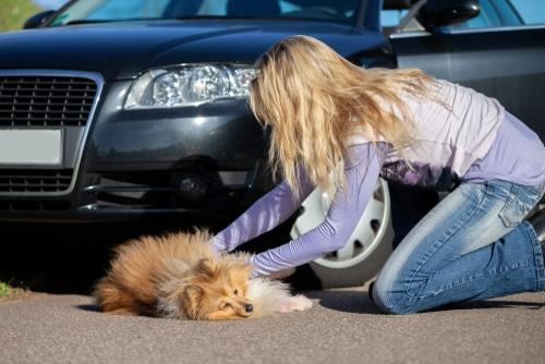 Verkehrsunfall - Schmerzensgeldanspruch eines Tierhalters wegen Tötung eines Hundes