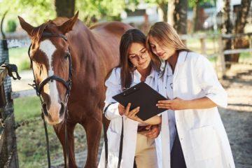Pferdekauf – Sekundärhaftung Tierarzt bei Übersehen einer Erkrankung bei der Ankaufsuntersuchung