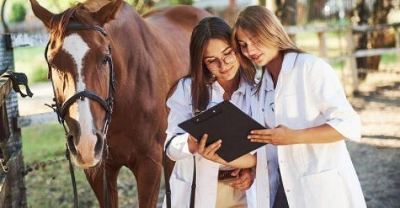 Pferdekauf - Sekundärhaftung Tierarzt bei Übersehen einer Erkrankung bei der Ankaufsuntersuchung