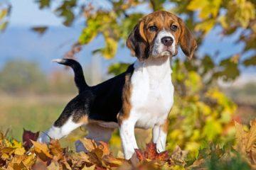 Tierüberlassungsvertrag – Vertragsstrafeversprechen bei Nichtabschluss einer Haftpflichtversicherung