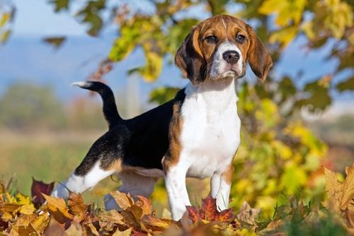 Tierüberlassungsvertrag - Vertragsstrafeverspreche