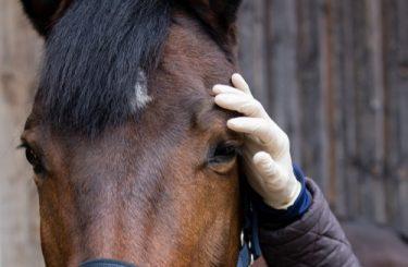 Pferdekauf - Gewährleistung - Unmöglichkeit der Nacherfüllung