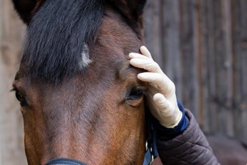 Vereinbarung einer Beschaffenheitsgarantie beim Kauf eines Pferdes