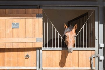 Hobby-Pferdehaltung mit Unterbringung von Hobby-Reitpferden – Nachbarrechte