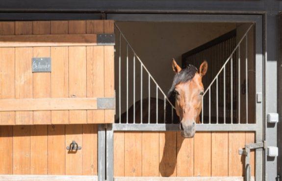 Hobby-Pferdehaltung mit Unterbringung von Hobby-Reitpferden - Nachbarrechte