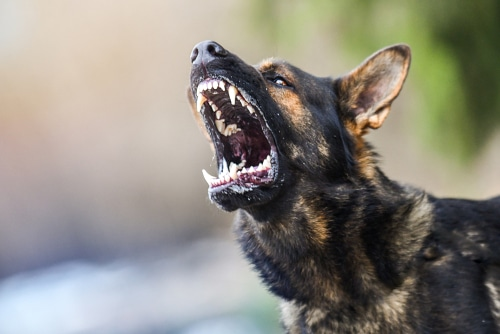 Verstoß gegen HundeVO - fahrlässig verursachter Hundebiss