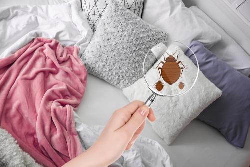 Gewährleistungsansprüche gegen Reiseveranstalter bei Ungeziefer in Bett