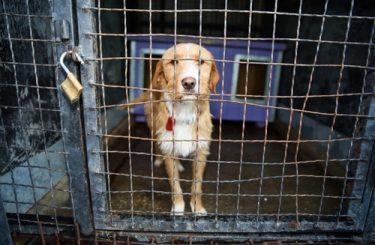 Verpflichtung Hundehalter zur Ausbruchsicherung Grundstück