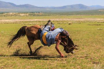 Tierhalterhaftung – Sturz von Pferd – Schadensersatz