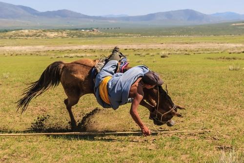 Tierhalterhaftung - Sturz von Pferd - Schadensersatz