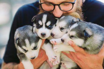 Anspruch Hundehalter auf Aufnahme in Hundezuchtverein