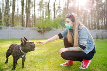 Vorläufiger Rechtsschutz – Schließung von Hundeschulen  – Corona-Pandemie