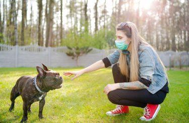Vorläufiger Rechtsschutz - Schließung von Hundeschulen