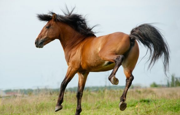 Tierhalterhaftung – Schadensersatz und Schmerzensgeld bei Tritt durch Pferd
