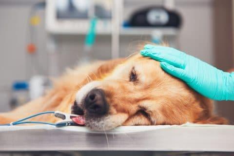 Tierarzt - Behandlungsfehler bei Operation an Hund