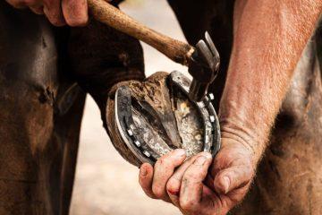 Schadensersatz wegen Fehlern beim Beschlagen eines Pferdes