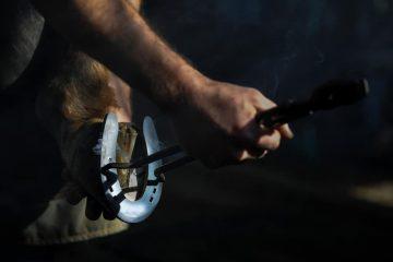 Fehler beim Beschlagen eines Pferdes – Schadensersatz