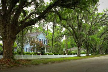 Nachbarrecht – Anspruch auf Beseitigung des Überhangs von Bäumen