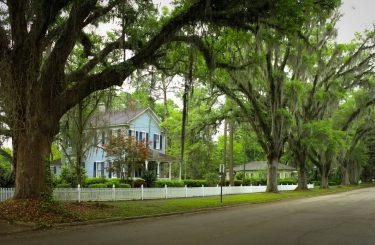 Nachbarrecht - Anspruch auf Beseitigung des Überhangs von Bäumen