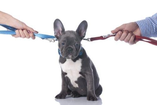 Haustier – Herausgabeanspruch bei Trennung einer nichtehelichen Lebensgemeinschaft