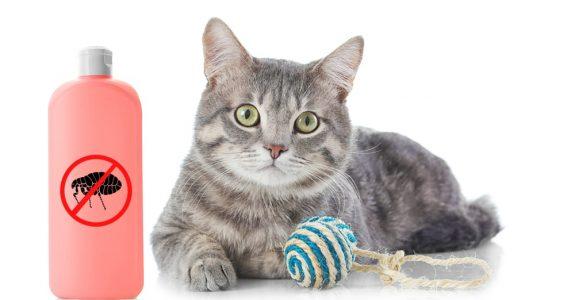 Flohbefall nach Betreuung einer Katze – Schadensersatzanspruch gegenüber Betreuer