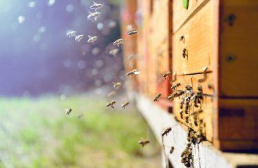Haltung von Bienenvölkern auf Nachbargrundstück – Unterlassungsanspruch