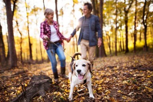 Sturzunfall bei einem Hundespaziergang auf einem Gehweg mit nassem Herbstlaub