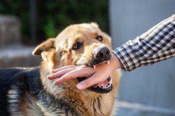 Hundebiss – Mitverschulden und Schmerzensgeldanspruch