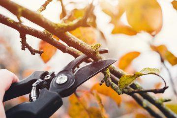 Rückschnitt von herüberhängenden Zweigen – Schadensersatzanspruch Nachbarn